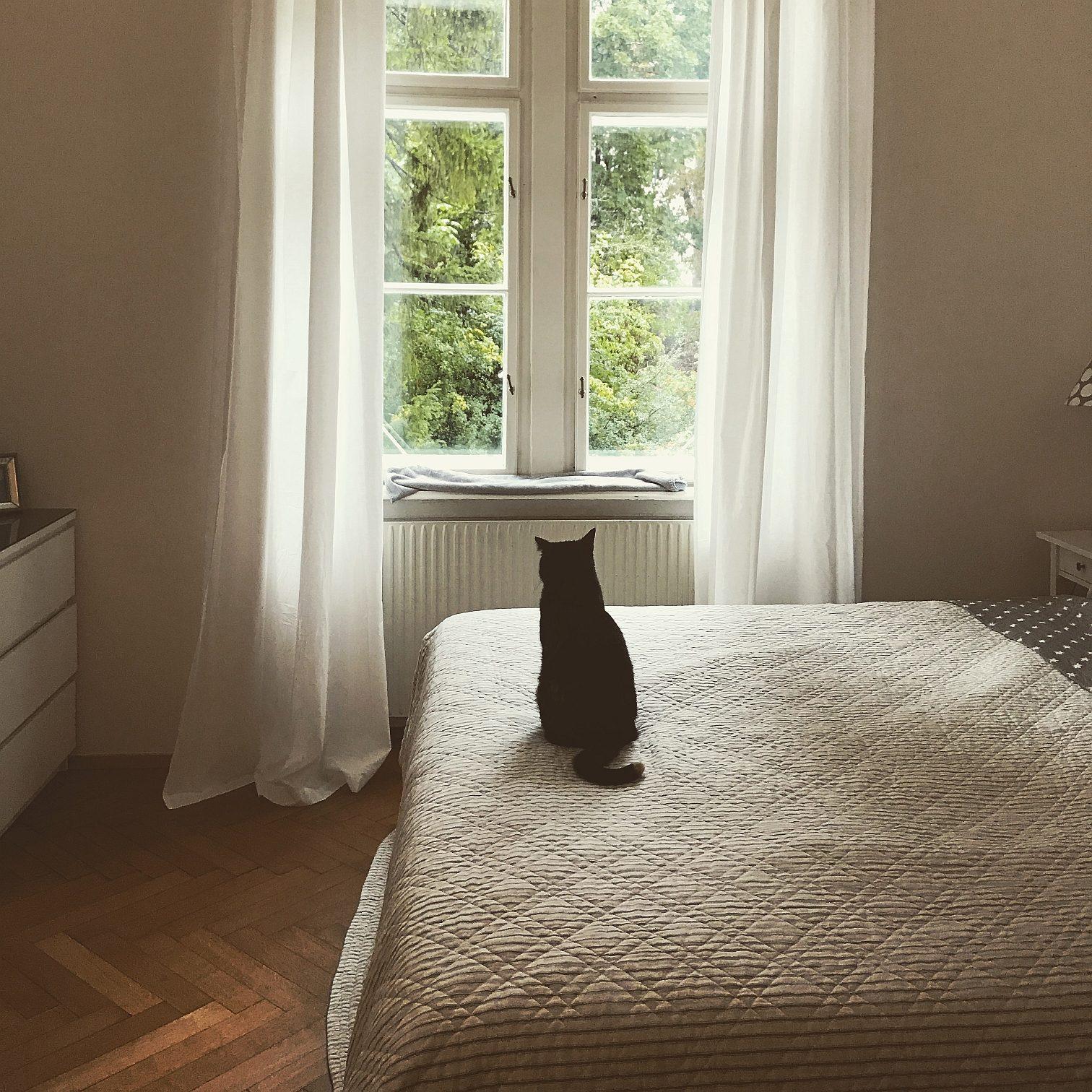 Schlafzimmer_Katze